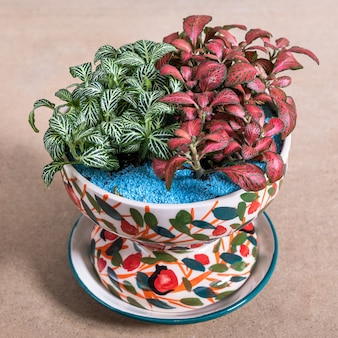 Painted begonia in the decorative ceramic pot
