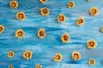 Painted blue textured backdrop with yellow chrysanthemum flowers