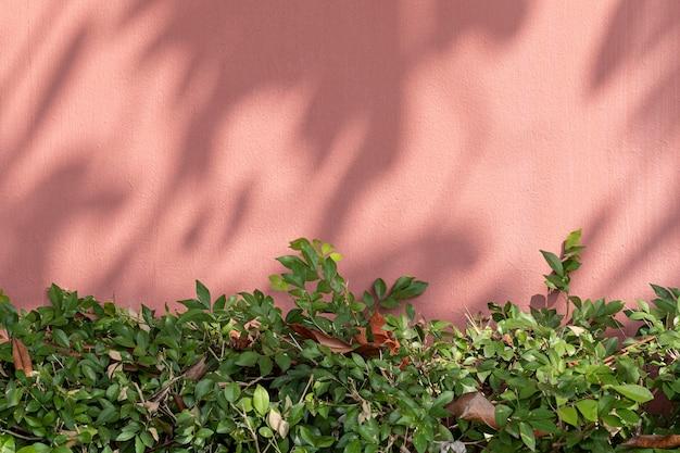 자연 채광 배경에 녹색 덤불이 있는 페인트 벽돌 벽