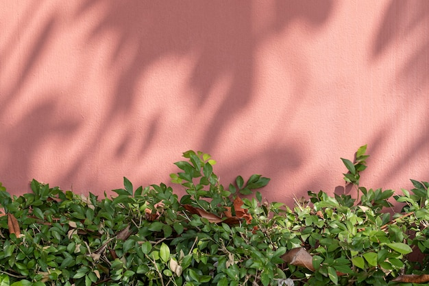Painted brick wall with green bush in natural light background