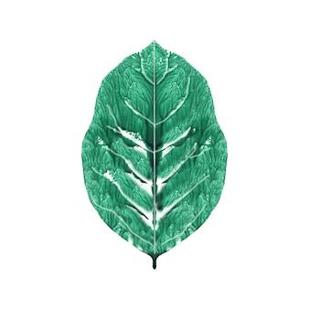 Раскрашенный лист