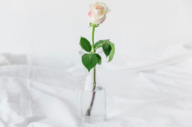 Painted rose standing in glass vase on table