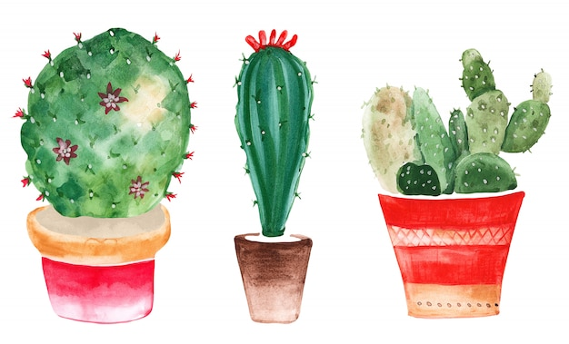 Painted watercolor cactus in a pot with flowers