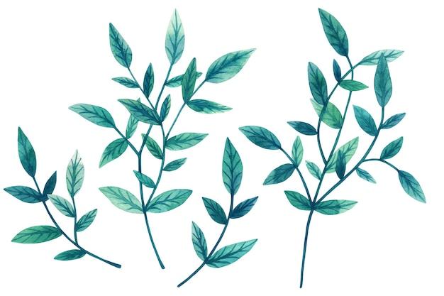 白い壁に分離された装飾的な緑の葉と枝の水彩画のセットを描いた。デザインの要素。