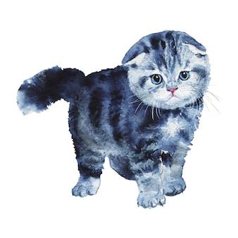 スコットランドの折り畳み子猫を描きます。水彩ペットイラスト。手描きのかわいい灰色の猫