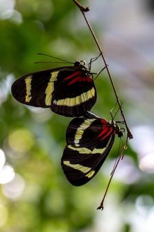Un paio di farfalle