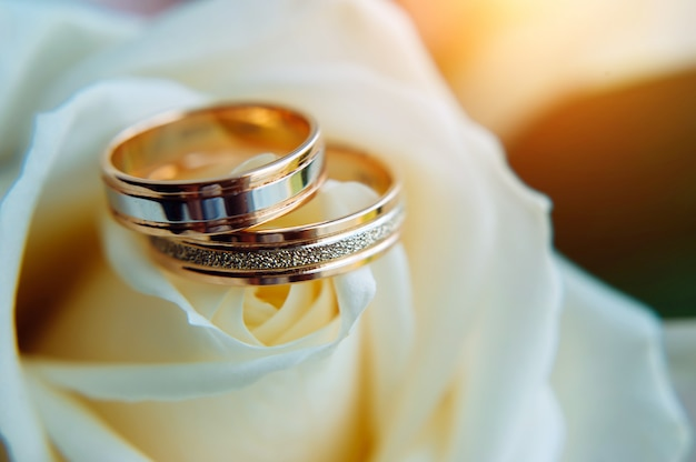 Pair of gold rings on rosebud, close up. two golden wedding rings laying on light beige roses, blurred background, soft focus.