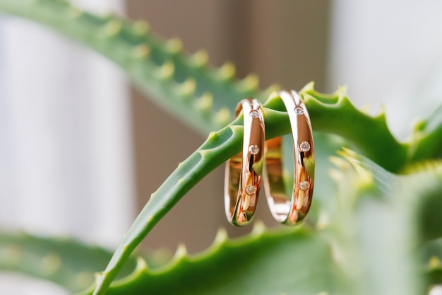Pair of golden wedding rings with diamonds on green prickly aloe vera leaf. symbol of love and marriage.