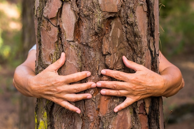 A pair of human hands hugging a tree in the woods - love for the outdoors and nature - earth day concept. an old woman hiding from the trunk. people save the planet from deforestation