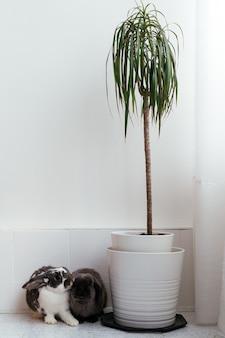 モダンなアパートの鉢植えの観葉植物の近くの床に一緒に座っている愛らしい家兎のペア