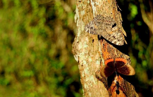 Пара бабочек, отдыхающих на стволе дерева