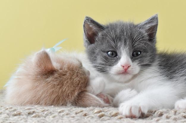 かわいい子猫のペアがニットの枕の上に横たわる