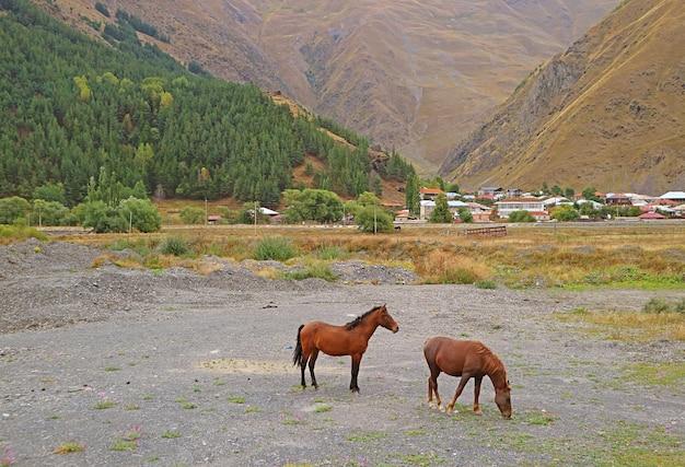 Пара лошадей, пасущихся в поле села сно предгорья кавказских гор в казбеги, грузия