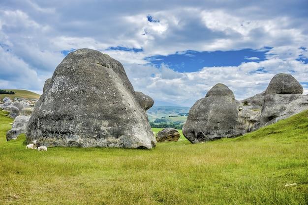 뉴질랜드 오아 마루 근처 와이 타키 분지의 초원에있는 암석 근처의 양 쌍