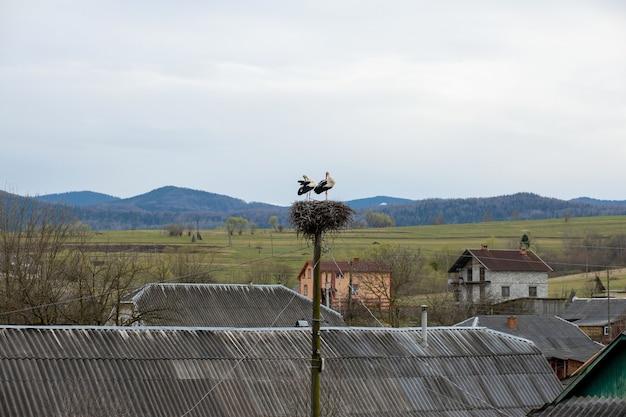 コウノトリのペアは、ポールの上の巣で遊ぶ