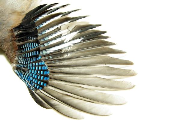 白で隔離された翼のペア