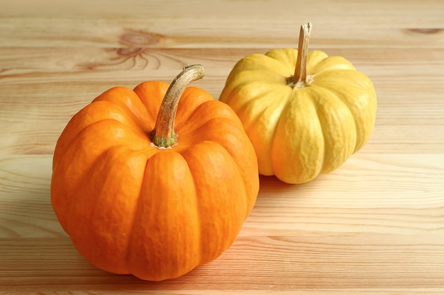 Pair of orange color and yellow ripe pumpkins