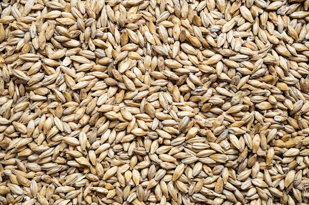 Pale ale malt grains malted barley for brewers