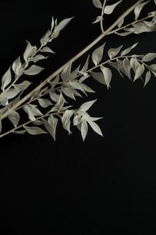 黒の背景に淡い緑の乾燥した植物の枝。美的ミニマルスタイリッシュな静物の花の構成。