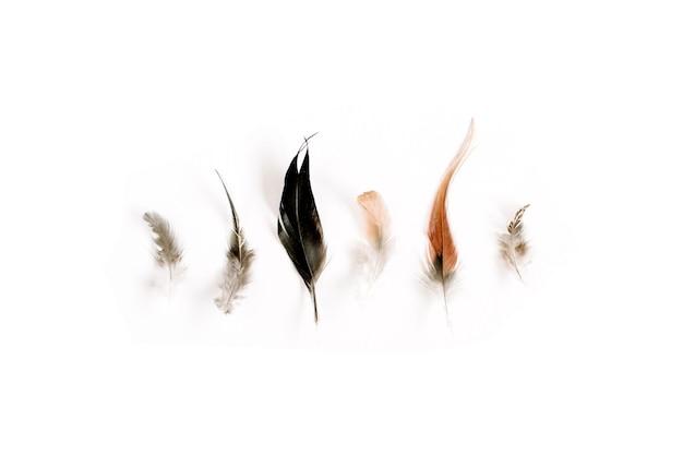 淡い様々な鳥の羽の上面図