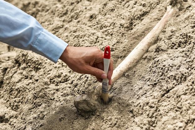 砂と石から化石の骨をブラシでクレンジングする古生物学者の手