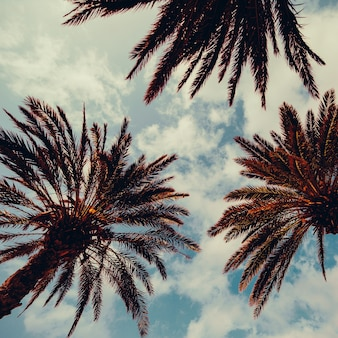 Пальма и голубое небо. фон моды палм-бич