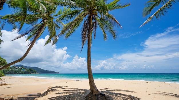 야자수와 열 대 해변 아름 다운 여름 배경입니다.