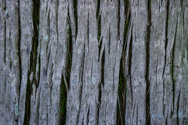 ヤシの樹皮のテクスチャー。熱帯の木の壁紙
