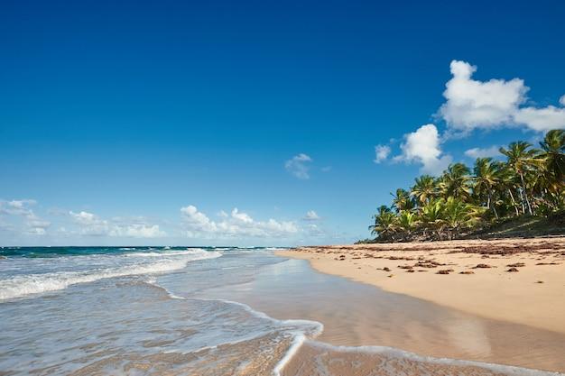 Палм-бич в тропическом идиллическом райском острове - карибское море - доминиканская республика пунта-кана