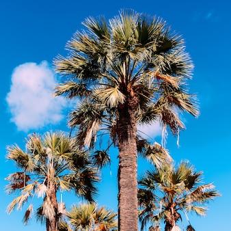 손바닥. 해변 휴가 분위기. 카나리아 섬
