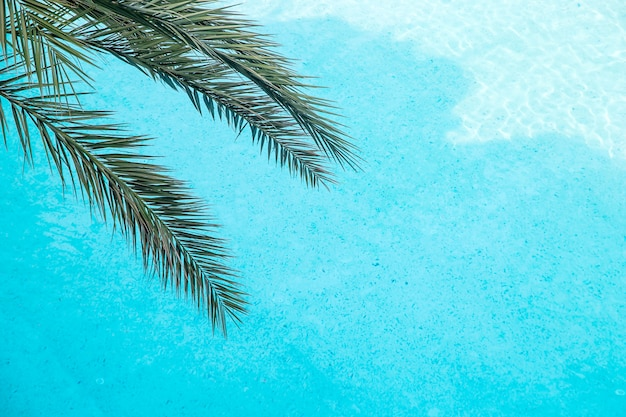 Palm branches on a blue pool background