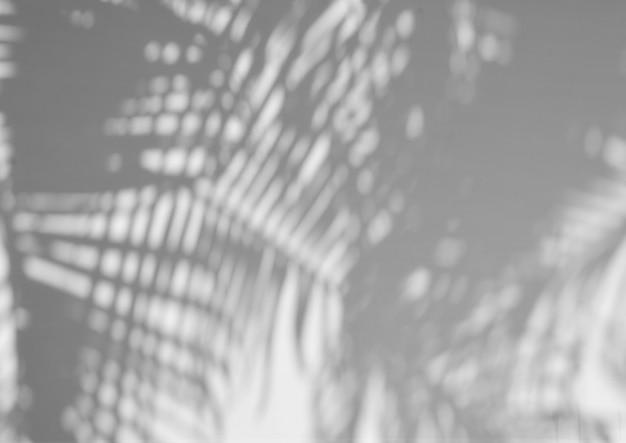 Palm coconut leaf shadow on cement wall - monochrome