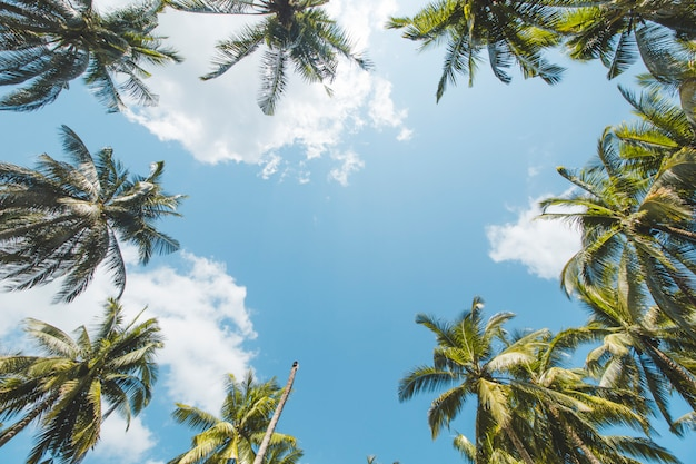 Palm or coconut tree and beautiful blue sky