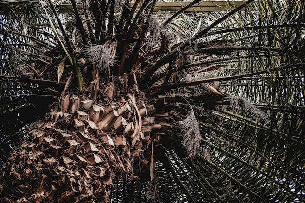 Palm exotic tropical texture