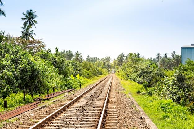 실론에 철도로 걸쳐 팜 숲입니다. 스리랑카 여행 경로