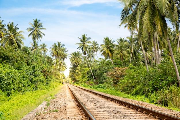 스리랑카에 철도로 걸쳐 팜 숲