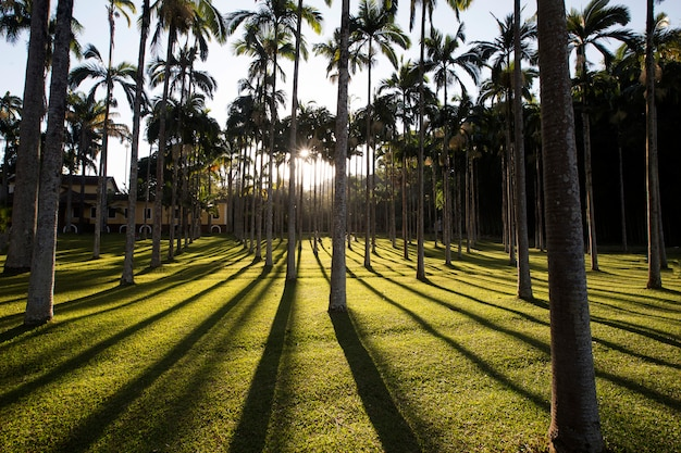 Palm garden in backlit, with shadows on grass