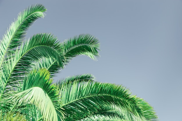 Palm green leaves. natural texture background with copy space.