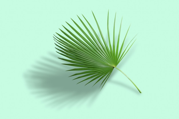 Palm green leaves in tropical forest isolated on green background with shadow