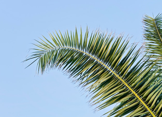 Palm leaf against blue sky with copy space