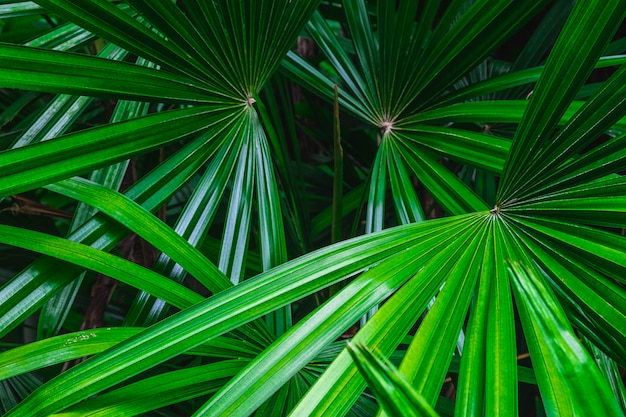 Palm leaf background in the forest