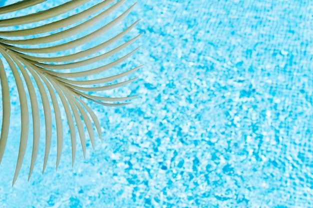 A palm leaf on a background of pool water concept of summer and travel copy space