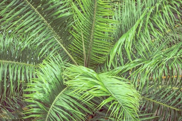 Palm leaf for background
