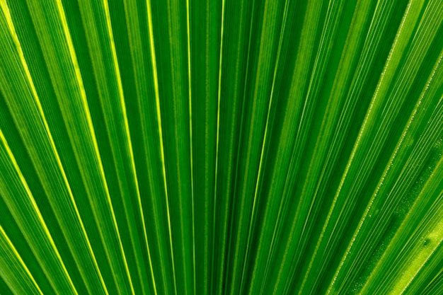 Palm leaf close up