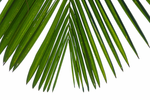 Palm leaf closeup at white clouds background.