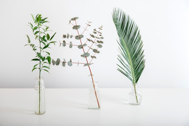 Palm leaf eucalyptus sprig of greenery in glass vases on white background. set of tropical plants