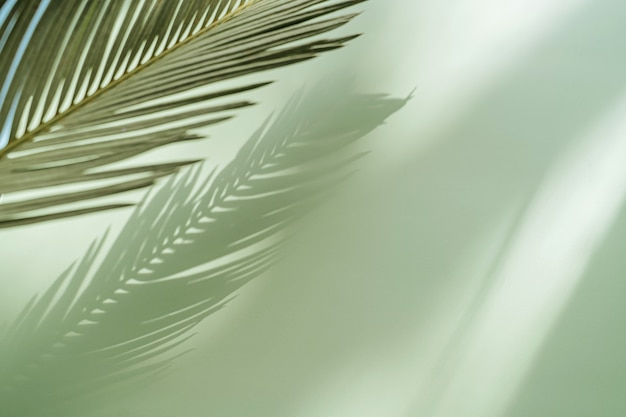 Palm leaf on a green surface with shadow. stylish background for presentation.