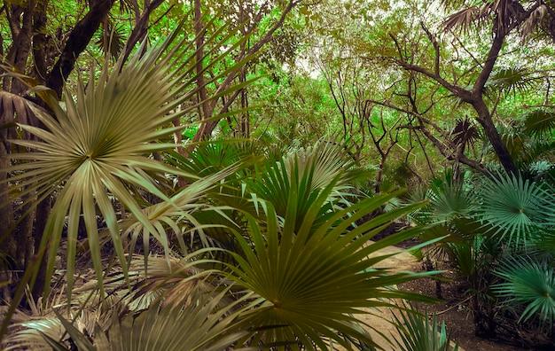 森の中心にある森の中心にある太陽光線に照らされたヤシの葉