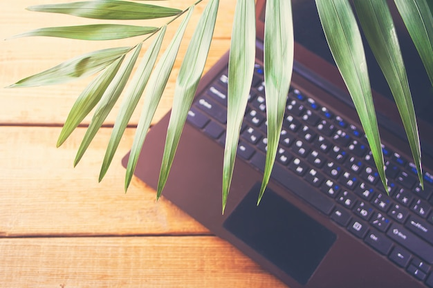 Palm leaf and laptop, marine theme, online work. copyspace. top view.