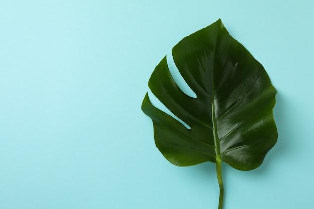 Пальмовый лист на синем изолированном фоне, место для текста